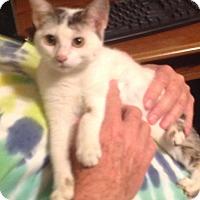 Adopt A Pet :: Daisy - Eureka, CA