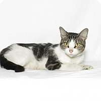Adopt A Pet :: Selina - Lufkin, TX