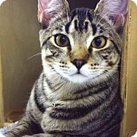 Adopt A Pet :: Jack - Houston, TX