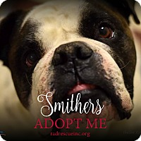 Adopt A Pet :: Smithers - Tucson, AZ