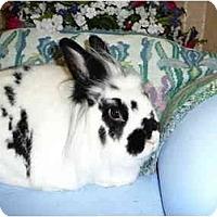 Adopt A Pet :: Sasha - Newport, DE