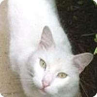 Adopt A Pet :: Peter - Miami, FL