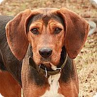 Adopt A Pet :: Miss Beulah (linda) - Brattleboro, VT