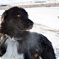 Adopt A Pet :: Wolfie - Cheyenne, WY