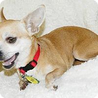Adopt A Pet :: Chloe - Umatilla, FL
