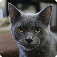 Adopt A Pet :: Squirt - Sarasota, FL