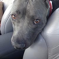 Adopt A Pet :: Shiloh - San Ramon, CA