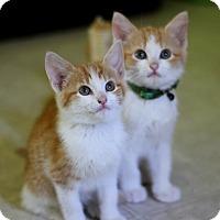 Adopt A Pet :: Caleb & Micah - Dalton, GA