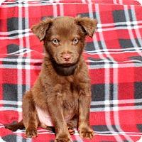 Adopt A Pet :: Mars - Los Angeles, CA