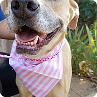 Adopt A Pet :: Gabby - Apple Valley, CA
