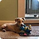 Adopt A Pet :: Sandy