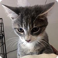 Adopt A Pet :: Leo - Loogootee, IN
