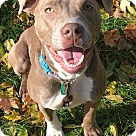 Adopt A Pet :: Matilda *Are you looking for a running partner?*