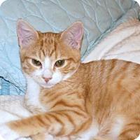 Adopt A Pet :: Goldie - Philadelphia, PA