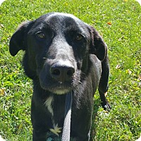 Adopt A Pet :: MIDNIGHT - Marion, IN