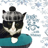 Adopt A Pet :: Whitney - East Brunswick, NJ