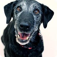 Adopt A Pet :: Ruthie *Foster* - Appleton, WI