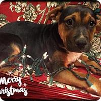 Adopt A Pet :: Victory - Los Banos, CA