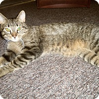 Adopt A Pet :: AVERY - Medford, WI
