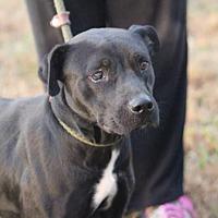 Adopt A Pet :: LILLY - McKenzie, TN