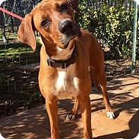 Adopt A Pet :: Kate - Santa Ana, CA