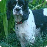 Adopt A Pet :: Nettie Bell - Sugarland, TX