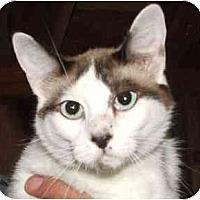 Adopt A Pet :: wiggle worm - Davis, CA