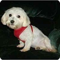 Adopt A Pet :: Hogan - Mooy, AL