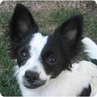 Adopt A Pet :: IVY - San Diego County, CA