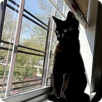 Adopt A Pet :: Frey - Brooklyn, NY