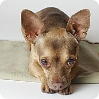 Adopt A Pet :: Frankie - Oakland, CA