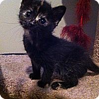 Adopt A Pet :: Tia - Edmonton, AB