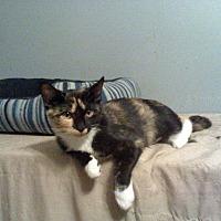 Adopt A Pet :: Colleen - Clarkson, KY