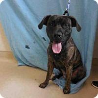 Adopt A Pet :: JOEY - McKinleyville, CA