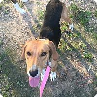 Adopt A Pet :: Foxy - Texarkana, TX