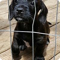 Adopt A Pet :: Baby Girl Tonya - Baileyton, AL