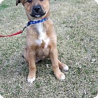 Adopt A Pet :: Maggie Mae - Saskatoon, SK