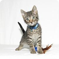 Adopt A Pet :: Triton - Lufkin, TX