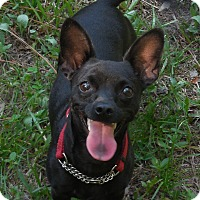 Adopt A Pet :: Billy - Ormond Beach, FL