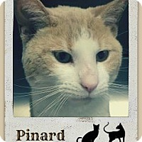 Adopt A Pet :: Pinard-Check out my cool video - Manchester, NH