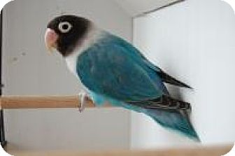 Parrot - Other for adoption in Manchester, Connecticut - Necco