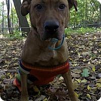 Adopt A Pet :: Zilla - Foster Needed - Detroit, MI