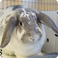 Other/Unknown Mix for adoption in Burlingame, California - Bunjovi