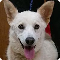 Adopt A Pet :: Denver - Bloomington, IL