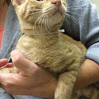Adopt A Pet :: Star - Hallandale, FL