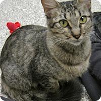 Adopt A Pet :: Mushu - Georgetown, TX