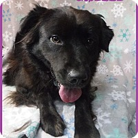 Adopt A Pet :: Giselle - Batesville, AR