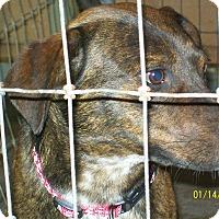 Adopt A Pet :: Clyde - Mexia, TX