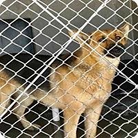 Adopt A Pet :: LUCKY - San Bernardino, CA