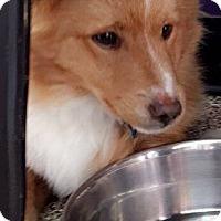 Adopt A Pet :: Slash - Thousand Oaks, CA